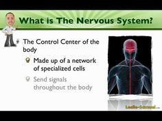 001 An Introduction to the Nervous System