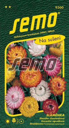 HOBBY, Květiny letničky – Slaměnka směs, 9300