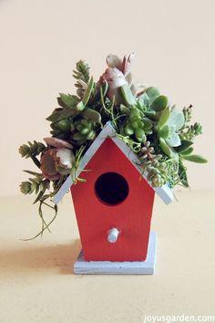 succulent birdhouse