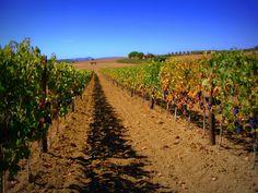 Il Morellino di Scansano #wine #maremma #tuscany