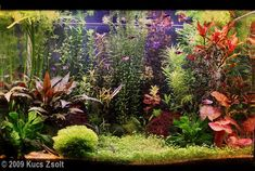 2009 AGA Aquascaping Contest - Entry #47