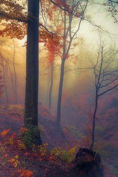 El bosque de Rienir