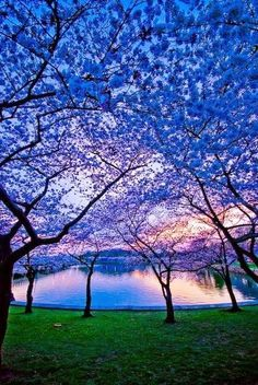 "Because I want to visitplaces like this and see these phenomena.""Blue Dusk, Charlottesville, Virginia"""