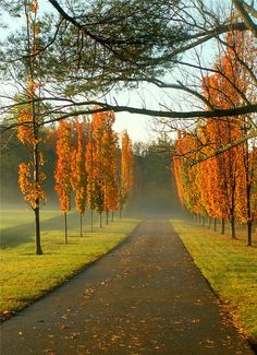 Autumn Standing at Attention by Stan Zimny Henri Matisse, Harmony Life, Standing At Attention, Fall Pictures, Portrait, Landscape Photography, Paths, Places To Go, Beautiful Places