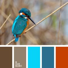 anaranjado, anaranjado ladrillo, anaranjado oscuro, anaranjado y celeste, azul…                                                                                                                                                                                 Más