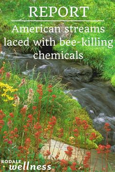 A common bee-killing chemical is traveling far beyond farm fields.  | Rodale Wellness