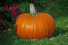 Turn your Halloween pumpkin into a healthy pumpkin pie