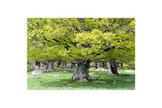 My tree via BAJANA Fine art SHOP. Click on the image to see more!