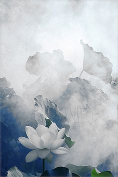 White Lotus Flower - Surreal Series: