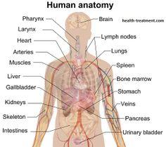 angela lisa (angelalisa8) on pinterest, Human Body
