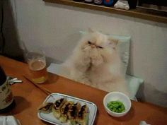 me at thanksgiving in cat version.