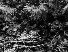 Day 90/365. I'm loving shooting things in black and white the more I do it! #Nature #BlackandWhite #Dark  #art #photography #photo #photoadaychallenge #photoaday #artwork #artistoninstagram #artist #photograph #yearofcreativehabits