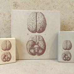 minilitos de piedra con litografias de anatomia. El cerebro humano. #anatomy #brain