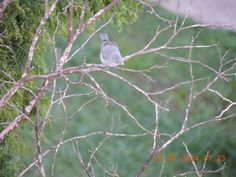 Pássaros da minha janela.