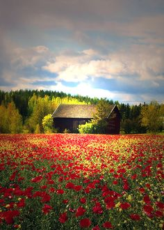 landscape, flowers, field, hut, wood, clouds, mountains