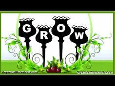 How to Grow Poppies   Growing Somniferum Poppy Flowers from Seeds via @jdubtbird  @eBay