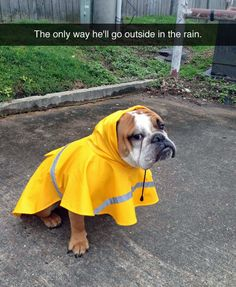 "f7065750 698 Best (""English Bulldog"") Humor & Fun images in 2019 