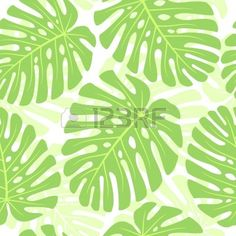 Leaves Of Tropical Plant - Monstera. Seamless Vector Background ...