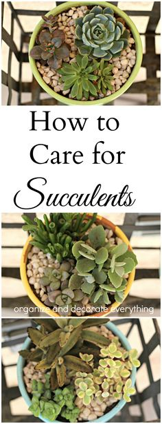 A beginners guide of how to care for Succulents.