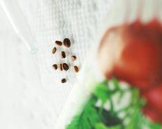 Microwave Plant Experiment: Radish Seed Germination | Education.com