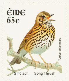 Sello: Song Trush (Turdus philomelos) (Irlanda) (Birds) Mi:IE 1557,Yt:IE 1562,Sg:IE 1497c