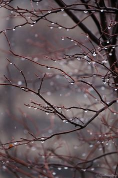 """cumuluslife: """" Freezing rain on the crabapple tree … """""""