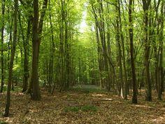 woods - Buscar con Google
