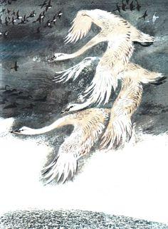 Никита Чарушин Art Illustrations, Children's Book Illustration, Soviet Art, Animal 2, Swans, Natural History, How Beautiful, Childrens Books, Moose Art