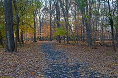 Glad I don't have to rake all those leaves. Looks like the inscriptions on that tree in the background on the left dates back to when Neshaminy State Park opened up to the public. The path leads out to Logan's Walk, the original lane into Sarobia from Dunksferry Road.