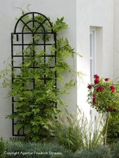 Functional yet decorative garden structures – galvanized steel garden arches and arbors, as well as wide-span pergolas, unique Rose Pillars and Classic Obelisks and Wall Trellises - provide support of climbing roses, clematis and vines. Iron Trellis, Wall Trellis, Garden Trellis, Metal Trellis, Outdoor Wall Art, Outdoor Walls, Clematis, Obelisk, Garden Arches