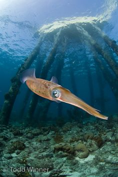 Scuba diving Bonaire. A school of a dozen squid circled me in only 11' of water, beneath a pier. I have been to Bonaire 3-4 times and will always return again. It's a great place to dive for all levels of experience.