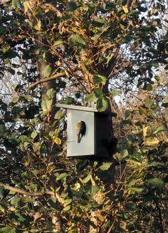 Uitzicht vanuit Villa Rosa op vogelhuisje. Hoorn Terschelling