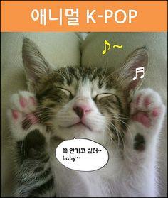 애니멀 K-POP_02_심쿵해_p6 | 출처: web7minutes