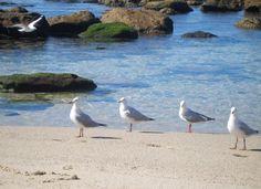 The Sea Birds