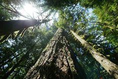 tall protective trees...feels like a canopy