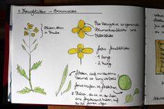 Die 10+ besten Bilder zu Herbarium vorlage in 2020 | herbarium vorlage, blumen pressen, pflanzen