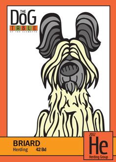 Briard from the Herding Group- Dog Breed Trading Cards  http://dogbreedtradingcards.tumblr.com/post/19290237532/42-bd-briard-from-the-herding-group