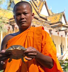 In Cambodia, CI's Mekong team is working to restore the softshell turtle population--and turning turtle hunters into turtle guardians! http://blog.conservation.org/2014/06/in-cambodian-riverside-villages-new-attitudes-toward-turtles #conservation #turtles #turtle #cambodia #mekong #activism #eco #wildlife #monks