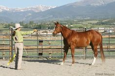 Earn your horse's trust with three key groundwork exercises from trainer Julie Goodnight.