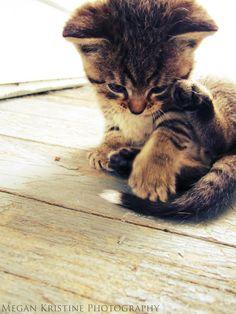 My tail !