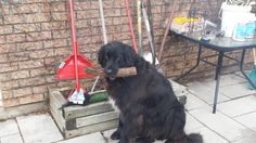 This is Ben. He doesn't know what the Telecom Lobby is but he is a good boy who likes to carry logs. #funny #meme #LOL #humor #funnypics #dank #hilarious #like #tumblr #memesdaily #happy #funnymemes #smile #bushdid911 #haha #memes #lmao #photooftheday #fun #cringe #meme #laugh #cute #dankmemes #follow #lol #lmfao #love #autism #filthyfrank #trump #anime #comedy #edgy