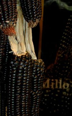 Black Sheep of the Patch Black Corn Fruit And Veg, Fruits And Veggies, Glass Gem Corn, Black Corn, Popcorn Seeds, Gothic Garden, Dark Autumn, Just Bake, Exotic Fruit