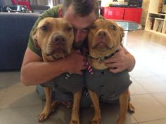 We are family! Pit bull babies