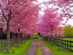 #pink trees ♥