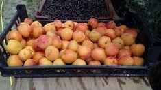 sárgabarack Apple, Fruit, Food, Meal, The Fruit, Eten, Meals, Apples