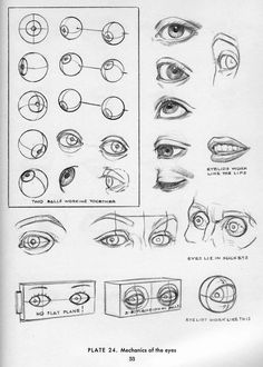 049 | Anatomy References for Artists - from Drawing the Head and Hands by Andrew Loomis