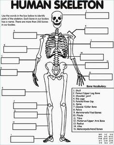 Os du corps humain the human body, human body unit, human body bones, h The Human Body, Human Body Unit, Human Body Systems, Human Eye, Human Body Science, Science Classroom, Teaching Science, Science For Kids, Science Activities