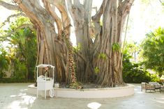 Romantic Engagement Celebration. Party Rentals and Decor by Gilded Group Decor. Miami Event Design, Miami Event Decor, Miami Event Floral, Miami Specialty Rentals |  Miami Wedding Design, Miami Wedding Decor, Miami Wedding Floral, Miami Wedding Specialty Rentals
