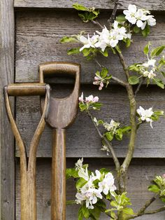 spring blossoms and garden tools