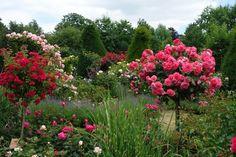 Rosengarten Hadamar Fotos -  #rosengarten #rosen #hadamar #roses #rose #rosegarden #garten #garden #flower #flowers #germany